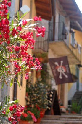 12 Oleander Isola Bella