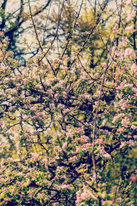 2014 April in pics 09