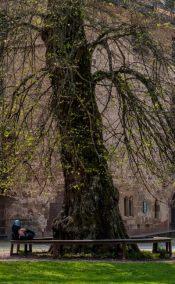 Kloster Maulbronn 14
