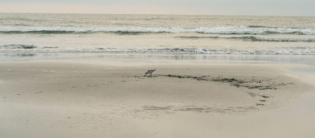 CHS Beach Walk 03