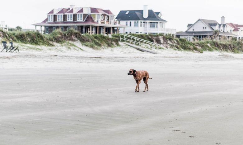 CHS Beach Walk 04