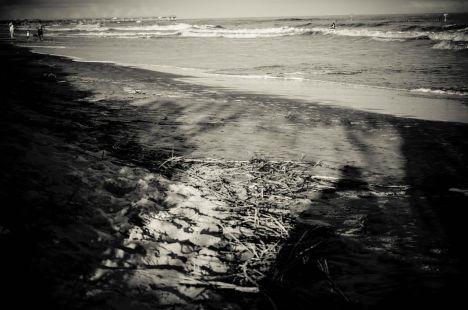 CHS Beach Walk 10