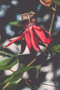EDI Botanic Gardens CKOH-07