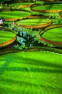 EDI Botanic Gardens CKOH-10