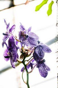 EDI Botanic Gardens CKOH-11