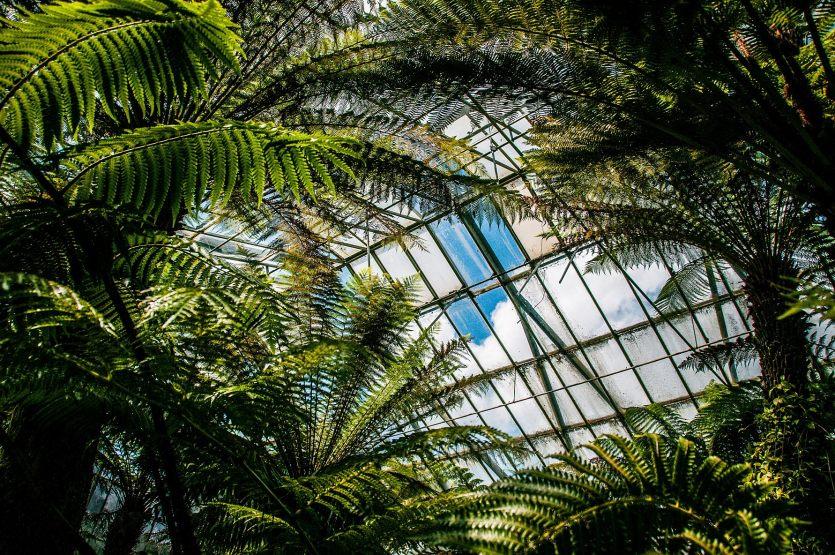 EDI Botanic Gardens CKOH-13