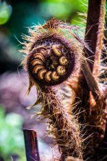 EDI Botanic Gardens CKOH-14