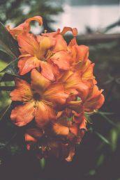 EDI Botanic Gardens CKOH-16