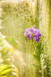 EDI Botanic Gardens CKOH-23