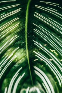 EDI Botanic Gardens CKOH-24