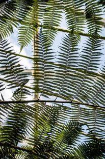 EDI Botanic Gardens CKOH-27