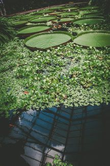 EDI Botanic Gardens CKOH-32