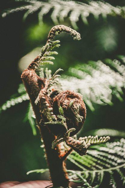 EDI Botanic Gardens CKOH-35