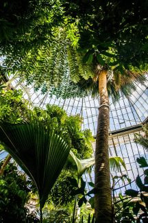 EDI Botanic Gardens CKOH-38